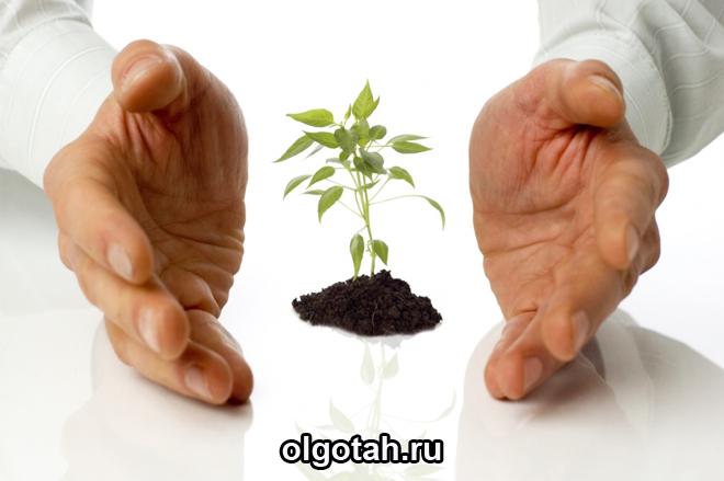 помощь начинающему бизнесу от государства