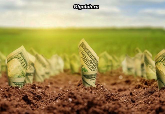 Денежные купюры растут из земли